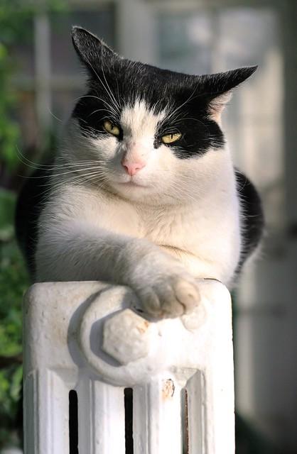 The cat that got, Olympus E-PL5, Sigma 60mm F2.8 DN | A