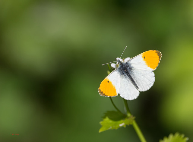 19 orange tip - Best2017