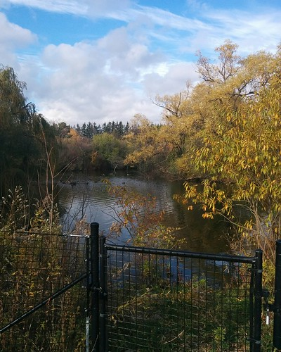Pond in late fall #toronto #torontozoo #pond #autumn #fall #latergram