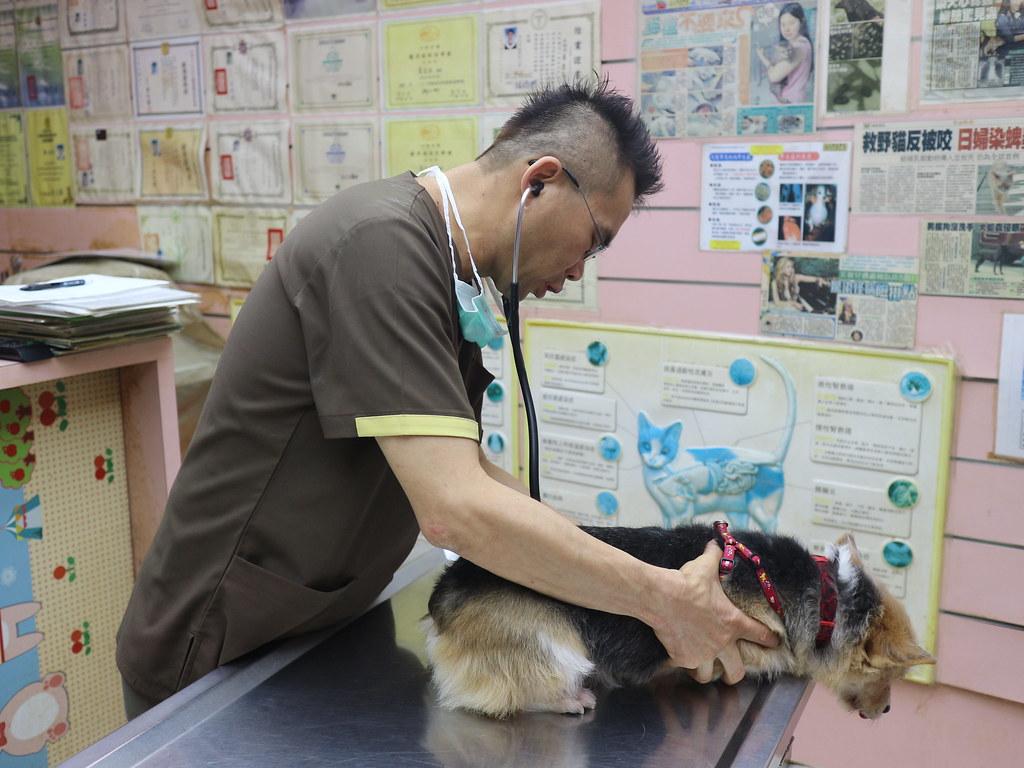 基隆汎汶動物醫院 (43)