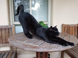 Carlton Cat