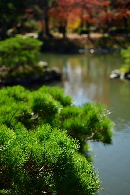 One scene in Shukkeien, Nikon DF, AF Micro-Nikkor 60mm f/2.8