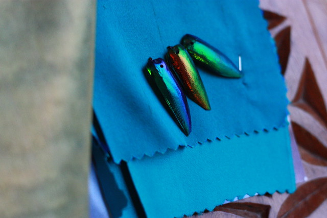 Echantillons scarabée