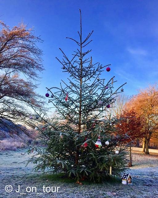 Christmas Tree GJC_IMG_6824