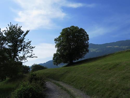 20170614 04 396 Jakobus Wolke Hügel Weg Wald Wiese