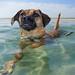 Hugo at the beach