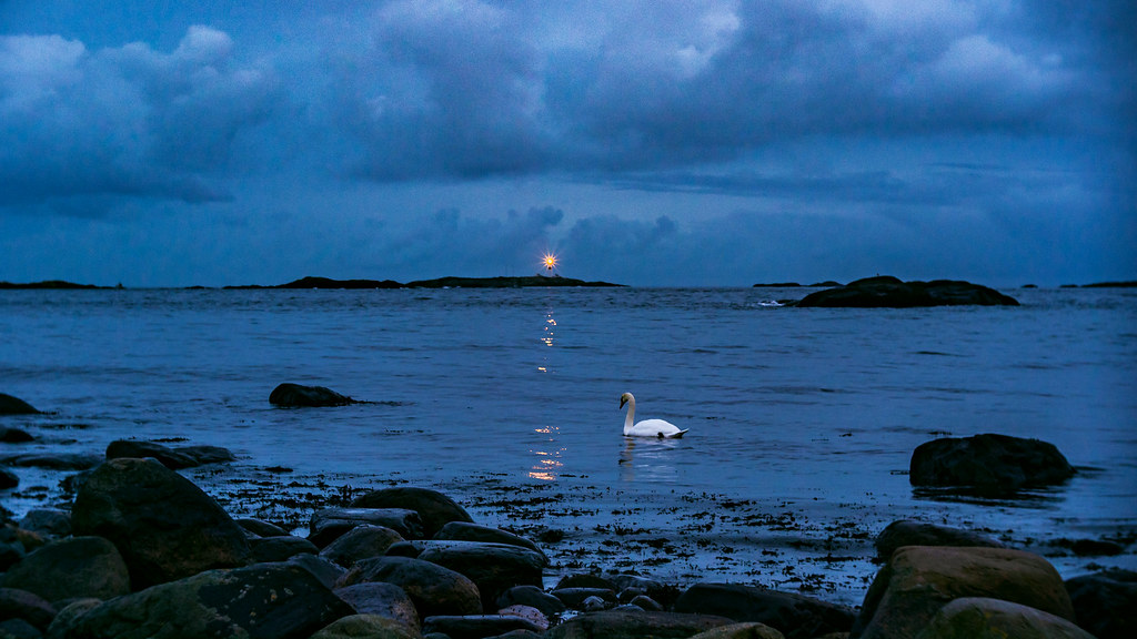 Swan and lighthouse