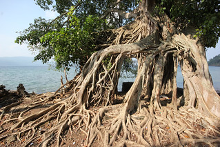 Roots, Ruins, Ross