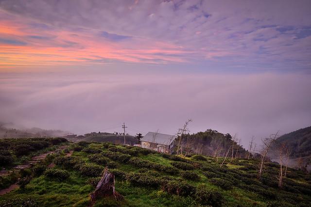 Tea farm, Mountain Dalun大崙山茶園