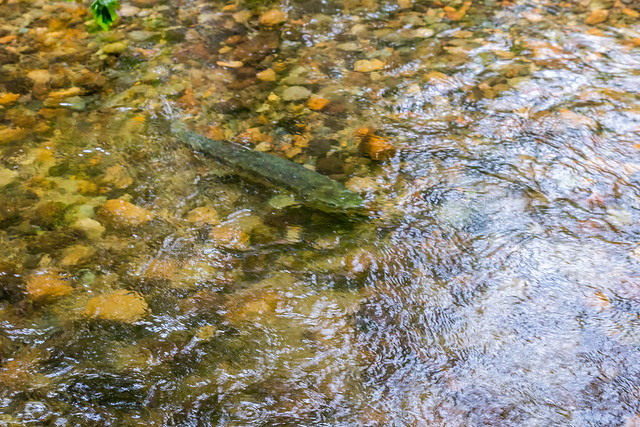Hoy Creek
