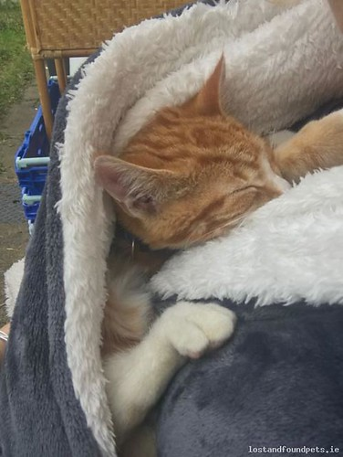 [Reunited Via Other Site] Sat, Feb 3rd, 2018 Lost Male Cat - Old Court, Meath