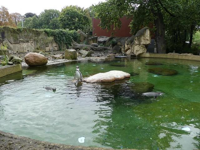 Pinguinanlage, Zoo Dresden
