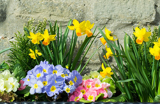 20170330-68_Spring Flowers Levisham - Horseshoe Inn