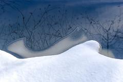 The Shape of Winter ©2017 Lauri Novak