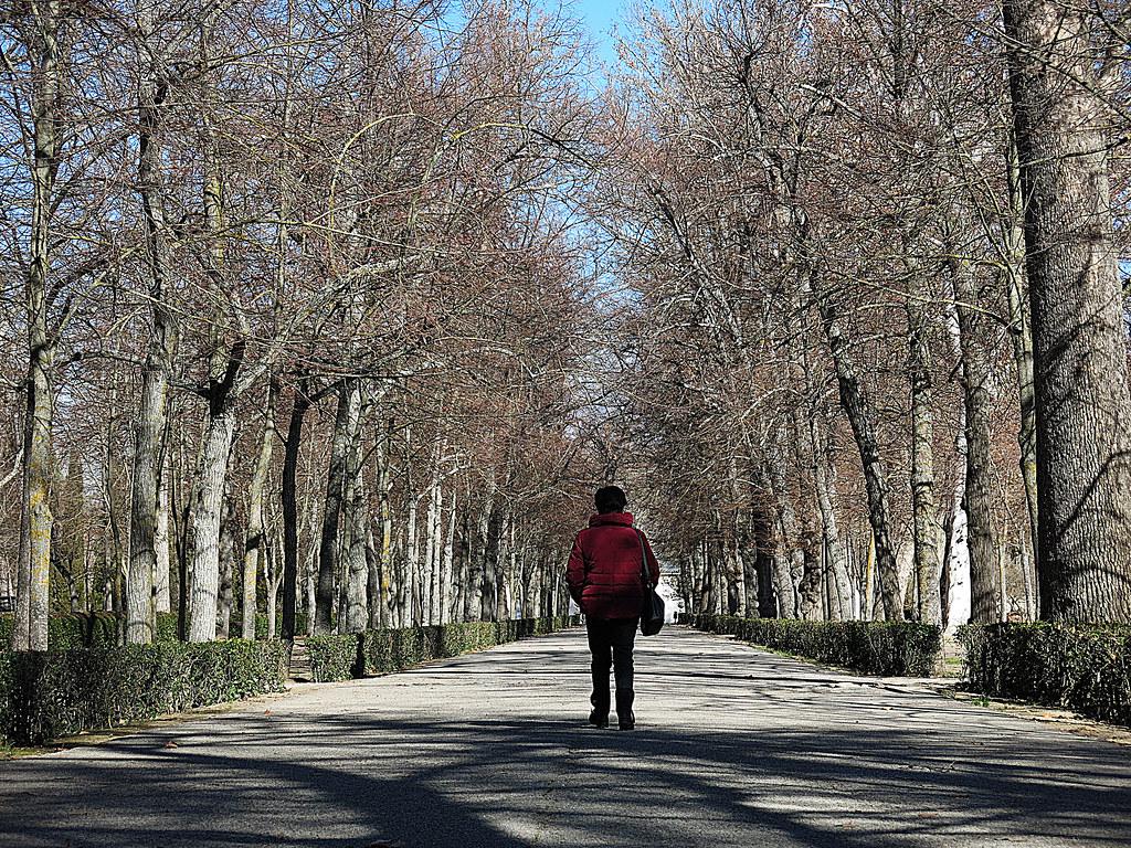 Paseo central en los Jardines de Aranjuez