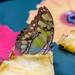 Malachite Butterfly RHS Wisley 08 February 2018 (21)