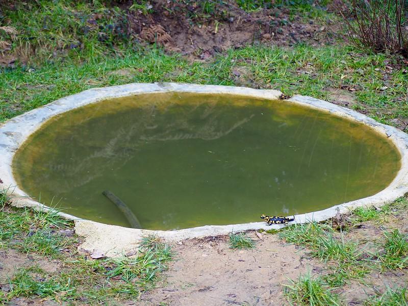 El bostezo de la salamandra 38535155930_8122444132_c