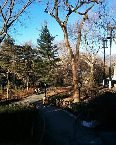Central Park in January (4) #newyorkcity #newyork #manhattan #centralpark #winter #january #theberesford #latergram