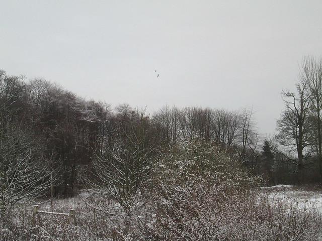 Winter garden 9