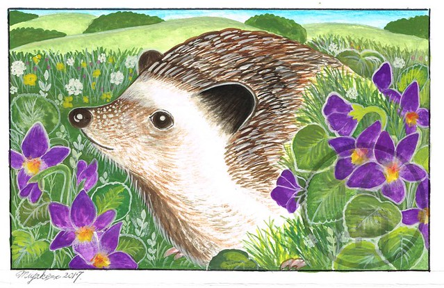 Hedgehog in the countryside