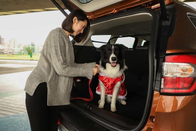 【圖二】為了出遊的安全性和舒適度,建議選擇寬敞和靜謐的SUV休旅車型,例如歐系智能SUV旗艦Ford Kuga,它寬闊的後座能提供寵物舒適的乘坐...
