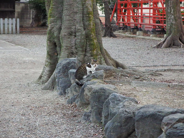 Today's Cat@2018-02-22