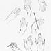 Hand line drawings