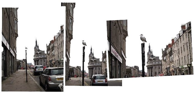 seagull collage