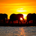 Elephants by Will Burrard-Lucas | Wildlife