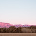 bosque farms late light by johngpt