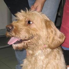 Cani in adozione: nove esemplari ospitati nel Canile Sanitario