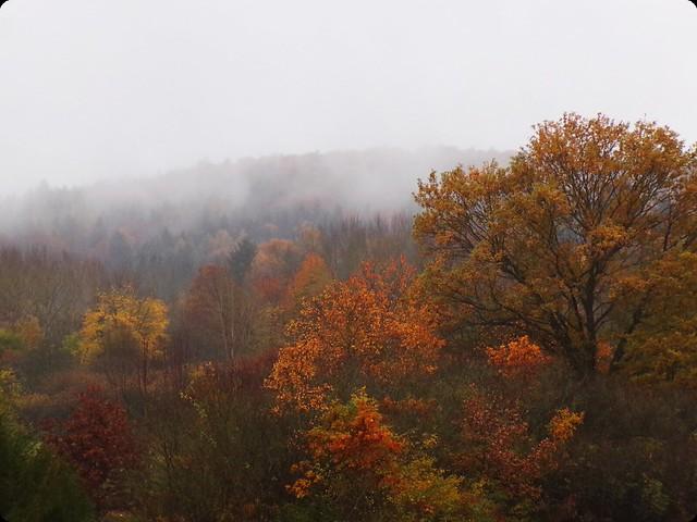 Autumn | Hedgefairy https://hedgefairy.wordpress.com