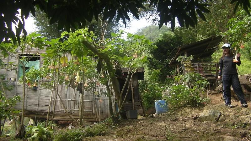 Roble homestead