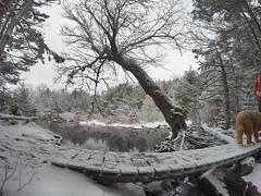 Hobson's Lake Trail - Kearney lake Trail System