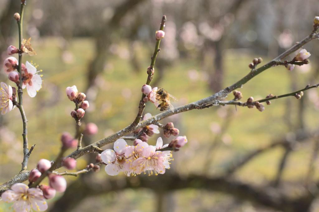 春の先触れ:Prelude to spring
