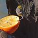 Verdin at Orange