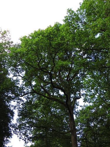 20140804 02 101 Jakobus Wald Bäume