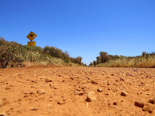 Watch for kangaroos whilst driving! From How to explore Australia independently - and on a budget