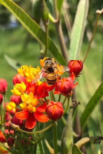 ✨❤️🌸🐝✨#bee #flowers