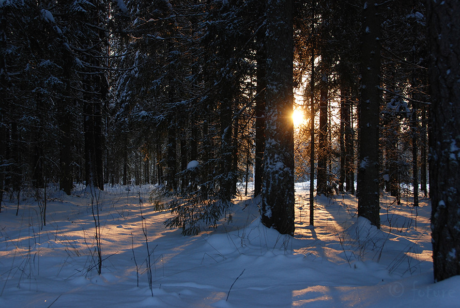 Winter, forest, sunset, Estonia, Kaido Rummel