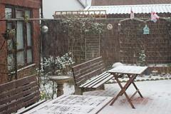 Garden Snow ( 1 ) .