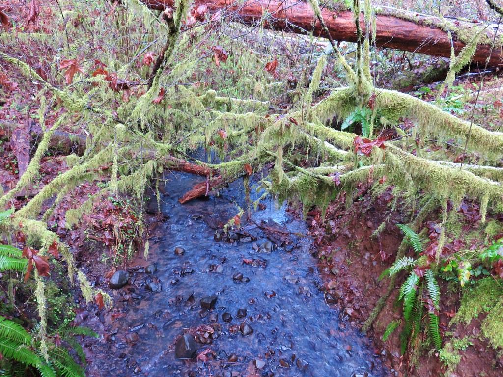 Calloway Creek