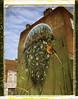 By Benjamin Duquenne (Roubaix)