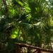 Small photo of Bahia Principe Sian Kaan