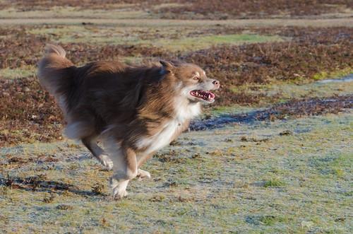 run like the wind 2/52