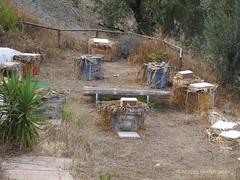 Spaanse bijen (Apis mellifera Iberica) bij imker Lee Morley bijenkast Layan