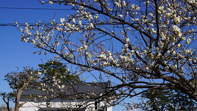 DSC06781小田原城