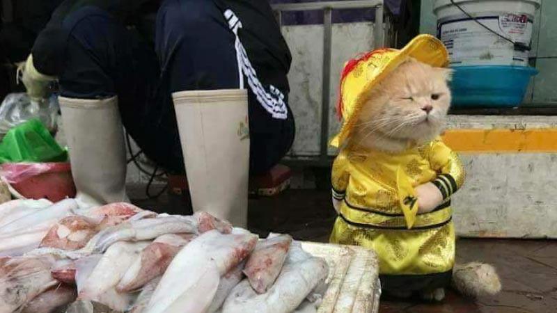 Kucing penjual ikan.