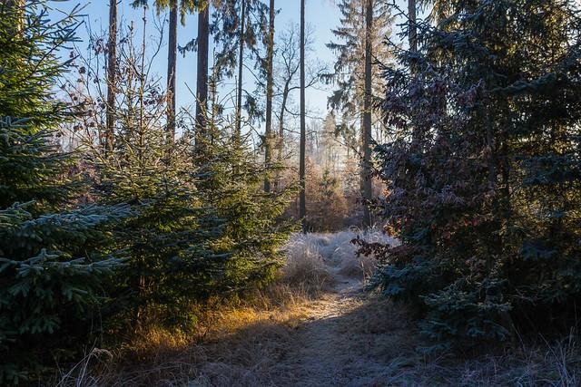 Sence of winter
