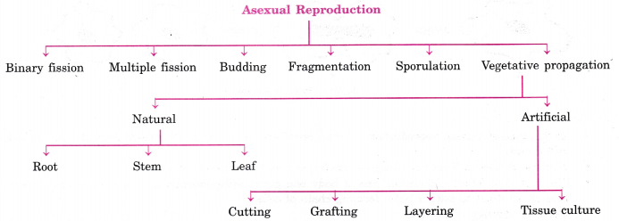 Asexual reproduction definition/example of type 1 construction